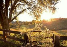 Image uploaded by Zoey. Find images and videos about nature, tree and country on We Heart It - the app to get lost in what you love. Country Life, Country Living, Country Roads, Country Music, Beautiful World, Beautiful Places, Beautiful Beautiful, Farm Life, The Great Outdoors