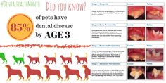 Don't let your pet be a statistic! Dental disease in dogs and cats is common, but you can help! Brush your dog's teeth (and kitty's, too) daily to remove plaque and prevent tartar buildup.