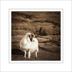 Sepia Photography  Matted Mounted Scottish by CrionnaPhotography