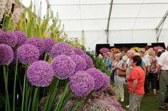 Stunning Horticultural Display at the Holker Garden Festival 2011