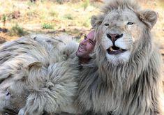 Leones Blancos del Sur de Africa [13 Fotos]