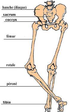 les os