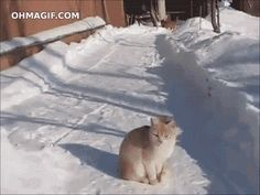 OK, it's weird, but it's funny. Watch the cat catch snow in the air. And I do mean IN THE AIR! Google+