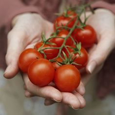 Tomatoes - Beefsteak, plum, cherry or grape, in salads, sauces, sandwiches or on a pizza, tomatoes are widely believed to benefit the heart and contain heavy doses of lycopene, a powerful antioxidant.