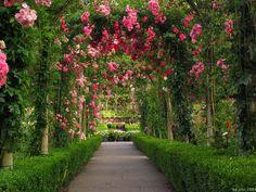 Rose Garden Wallpapers Photo