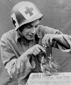 In this photo a Medic of an unidentified unit takes some time out and feeds some birds resting on an upturned 10-in-1 Ration box. The GI wears HBT Coveralls, and has square medical markings on his M1 Helmet. (US National Archives)