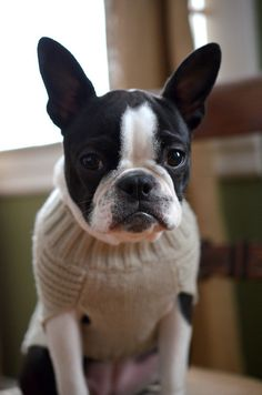 Not sure about my sweater   ...........click here to find out more     http://googydog.com