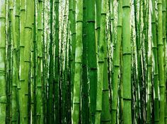 Blooming Artificial 150cm H Natural Bamboo Tree Plant High Quality Faux Plant