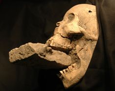 The remains of a female 'vampire' from Venice, buried with a brick in her mouth to prevent her feasting on plague victims.>>> a vampire in Venice? Archaeological Discoveries, Archaeological Finds, Fotografia Post Mortem, Vampire Skull, Vampire Art, Female Vampire, Interesting History, Angst, Sierra Leone