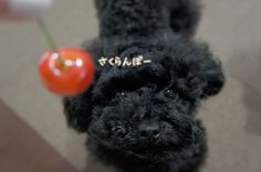 葵~えぁれん...associated snowmom ❤︎チェルナちゃん http://ameblo.jp/7-noa/entry-12041723945.html