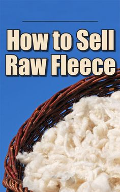 Are you raising sheep for profit? Get sound business advice for creating a high-quality raw fleece to sell to your customers. Babydoll Sheep, Goat Care, Goat Meat, Sheep Breeds, Future Farms, Spinning Wool, Sheep Farm, Goat Farming, Hobby Farms