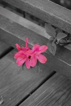 selective color pink flower,,,