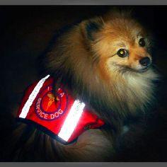 Stay safe, humans.   xoxo, Pompom baby  (photo from google)