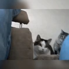 Almost Tubby LoL #cat #catgif #funnycatgif #bowchickameowmeow