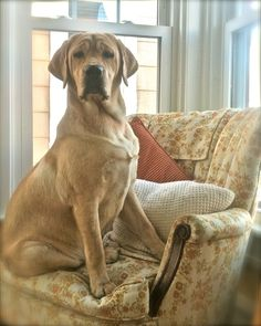 """What do you mean, """"your"""" chair?"""