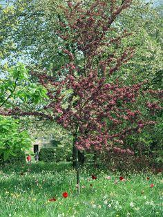Pembroke Garden