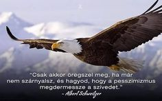 A kép forrása: Roland Nádhera Albert Schweitzer, About Me Blog, Bald Eagle, Wisdom, Signs, Quotes, Funny, Quote, Life