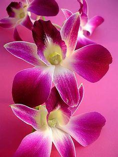 O Poder das Flores O Povo Flor significado das flores horoscopo das flores - Sabedoria e Espiritualidade Feminina