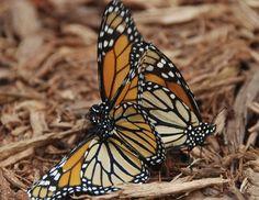 Exterior: Pleasing Best Butterfly Garden Design from Make A Butterfly Garden Design