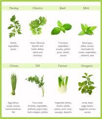 eight awesome herbs