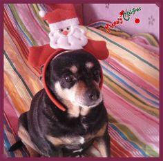 shila e il suo cerchietto di Natale, Join me in voting!