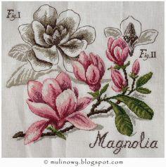 Vèronique Enginger - Études De Botanique - Magnolia ukończona !