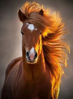 Brown Horse – Diamond Painting Kit – My Diamond Paintings Braunes Pferd – Diamantmalerei-Kit – Meine Diamantbilder Cute Horses, Pretty Horses, Horse Love, Beautiful Horses, Animals Beautiful, Beautiful Beautiful, Beautiful Redhead, Beautiful Pictures, Beautiful Sunrise