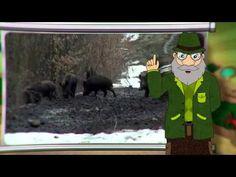 Erdő Ernő Bácsi meséi - Mit esznek a vaddisznók?