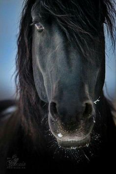 Wild, beautiful horse