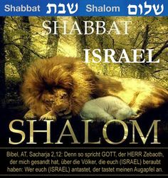 Shabbat shalom, Lion & Lamb lie down to rest. Saturday Sabbath, Sabbath Day Holy, Sabbath Rest, Happy Sabbath, 4th Commandment, Shabbat Shalom Images, Messianic Judaism, Lion Of Judah, Jerusalem Israel