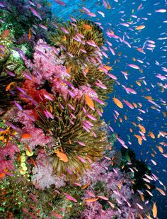 These islands really have it all from stunning reef walls and wrecks to excellent cave and night diving.