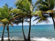 Pigeon Island, Atlantic side, St. Lucia - Review of Pigeon Island National Park, St. Lucia, Caribbean - TripAdvisor