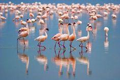 Lake Nakuru Holiday Offers