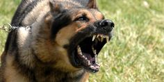Lifesaving Combat Tips To Survive Wild Animal Attacks (Part - pinnere Wild Animals Attack, Animal Attack, Pitbull, Dog Nipping, Flies Outside, Top 10 Dog Breeds, Deadly Animals, Deadly Creatures, Stop Puppy From Biting
