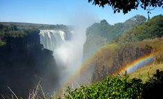 Baboons, elephants, and hippos are often spotted along the shores of Victoria Falls.  (Courtesy damurphs/myBudgetTravel)