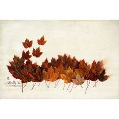 Maple Leaf Photography- Autumn Color Photograph- Nature Photography-... ($31) ❤ liked on Polyvore featuring home, home decor, wall art, autumn tree wall art, photography wall art, leaves wall art, brown wall art and fall home decor