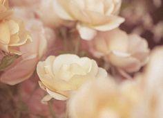 soft flowers vintage