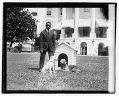 White House President Hardings Dogs O'Boy and Laddie by GalleryLF, $6.45