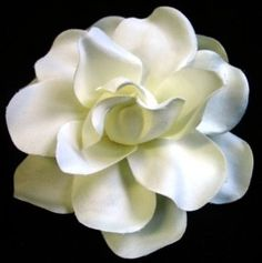 Gardenias, we open the windows just for the sweetness.