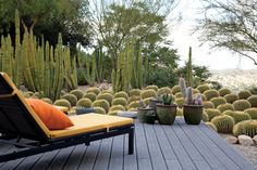 Love the use of barrel cactus! Roy Dowell and Lari Pittman's cactus garden, Los Angeles