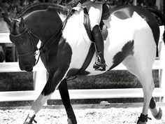 pride-riding: Photo credit to Lindsey Moser photography B&W paint Horse Hay, My Horse, Horse Love, All The Pretty Horses, Beautiful Horses, Beautiful Things, Horse Dance, Barrel Racing Horses, Horse Pictures
