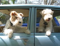 Taxi for Fox. More De Foxes, Chips, Foxes 007 250, Fox Terriers, Wire Foxes…