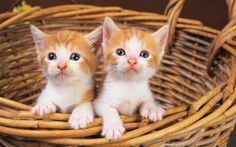 Two Cats In Basket wallpapers HD free - 245747