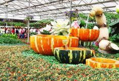 Giant Vegetables displayed at a vegetable expo in China