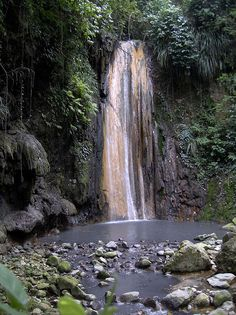 I swam under this St. Lucia Waterfall in a rainforest excursion called en bas saut.  The water was freezing, but it was amazing.  The view surrounding the pool is dense tall rainforest, and absolutely beautiful.