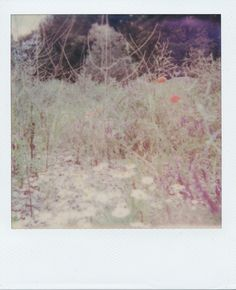 Frau Koriander posted a photo:  Revue 1001 Polaroid Land Camera  Impossible Instant Film Color for SX-70  expired for half a year (made in 1/2015)  Canon CanoScan 8800F  blog  Homepage  Instagram  Getty Images  Tumblr