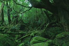 屋久島 もののけの森-1.jpg