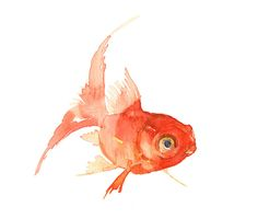 Goldfish Watercolor Painting Watercolor painting by eva