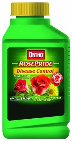 Scotts Company 0347060 Ortho RosePride Disease Control Concentrate, 16-Ounce by The Scotts Company. $17.19. Endorsed by the American Rose Society. Leaves no unsightly residue on foliage or blossoms. Controls and protects against all major rose diseases. Controls black spots, rust, and powdery mildew on roses and other ornamentals. Ortho rosepride disease control concentrate. This Ortho rosepride disease control concentrate protects against all major rose diseases. Endorsed by...