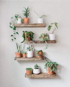 House Plants Decor, Plant Decor, Plants In Bedroom, Fake Plants Decor, Dorm Plants, Plant Rooms, Living Room Plants Decor, Garden Bedroom, Plants For Room